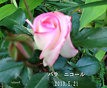 2013_05_21_7509_edited1