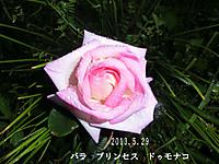2013_05_29_7846_edited1