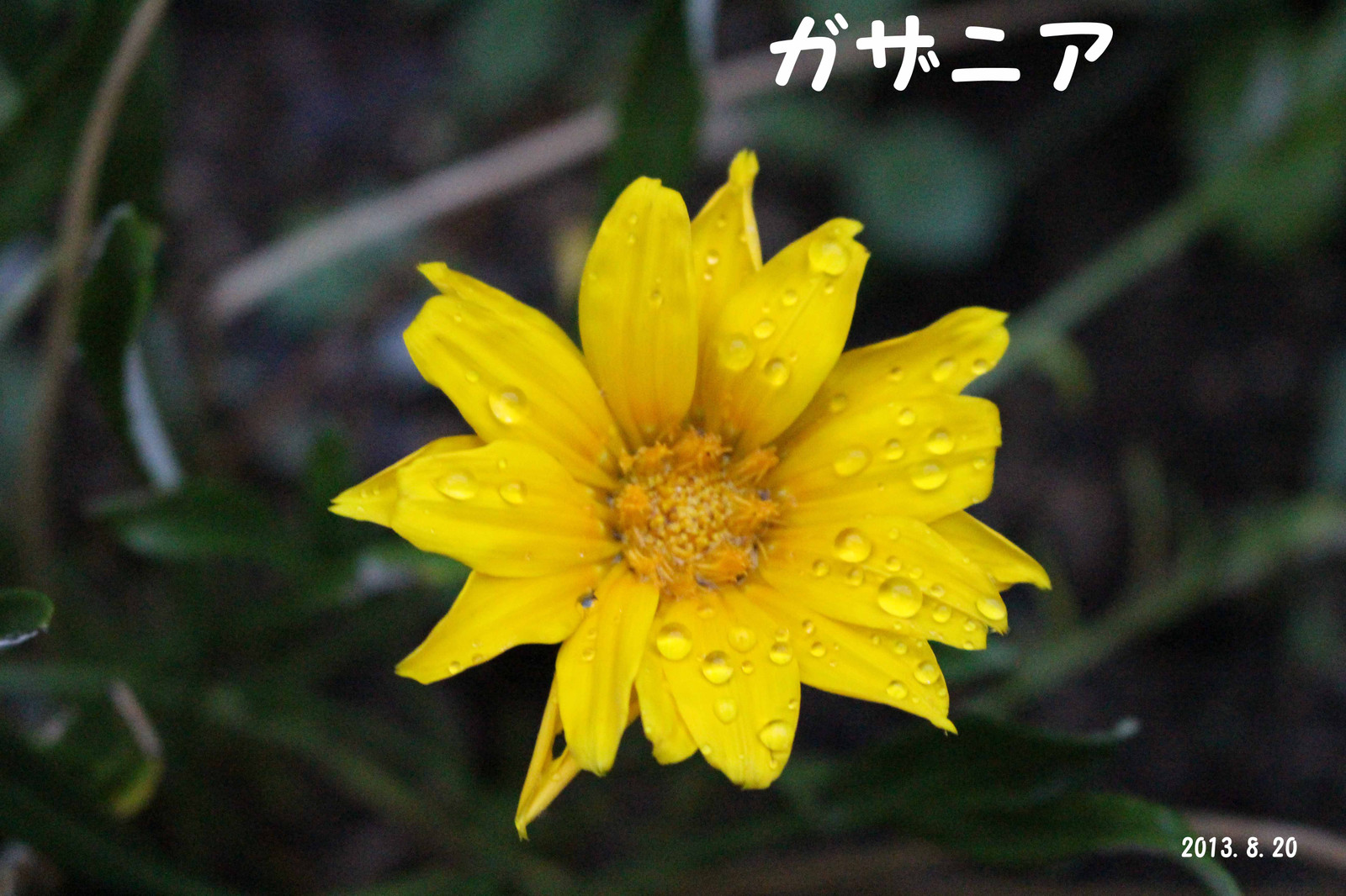 2013_08_20_1943_edited1