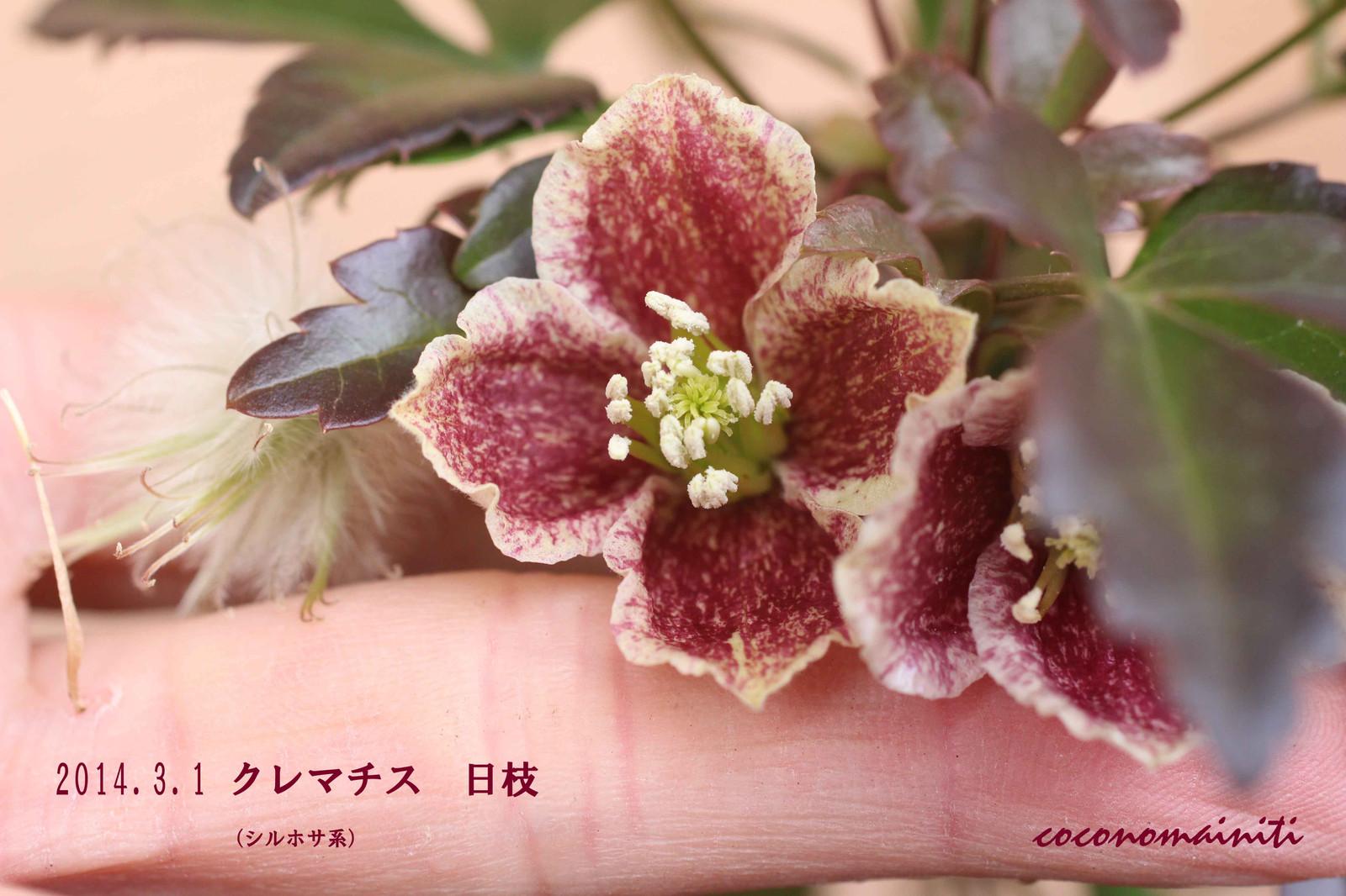 2014_03_01_4917_edited1