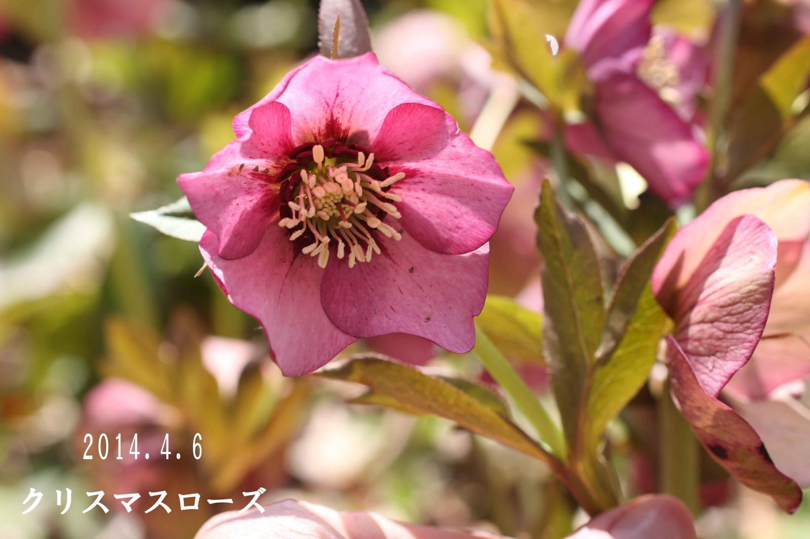 2014_04_06_7051_edited1