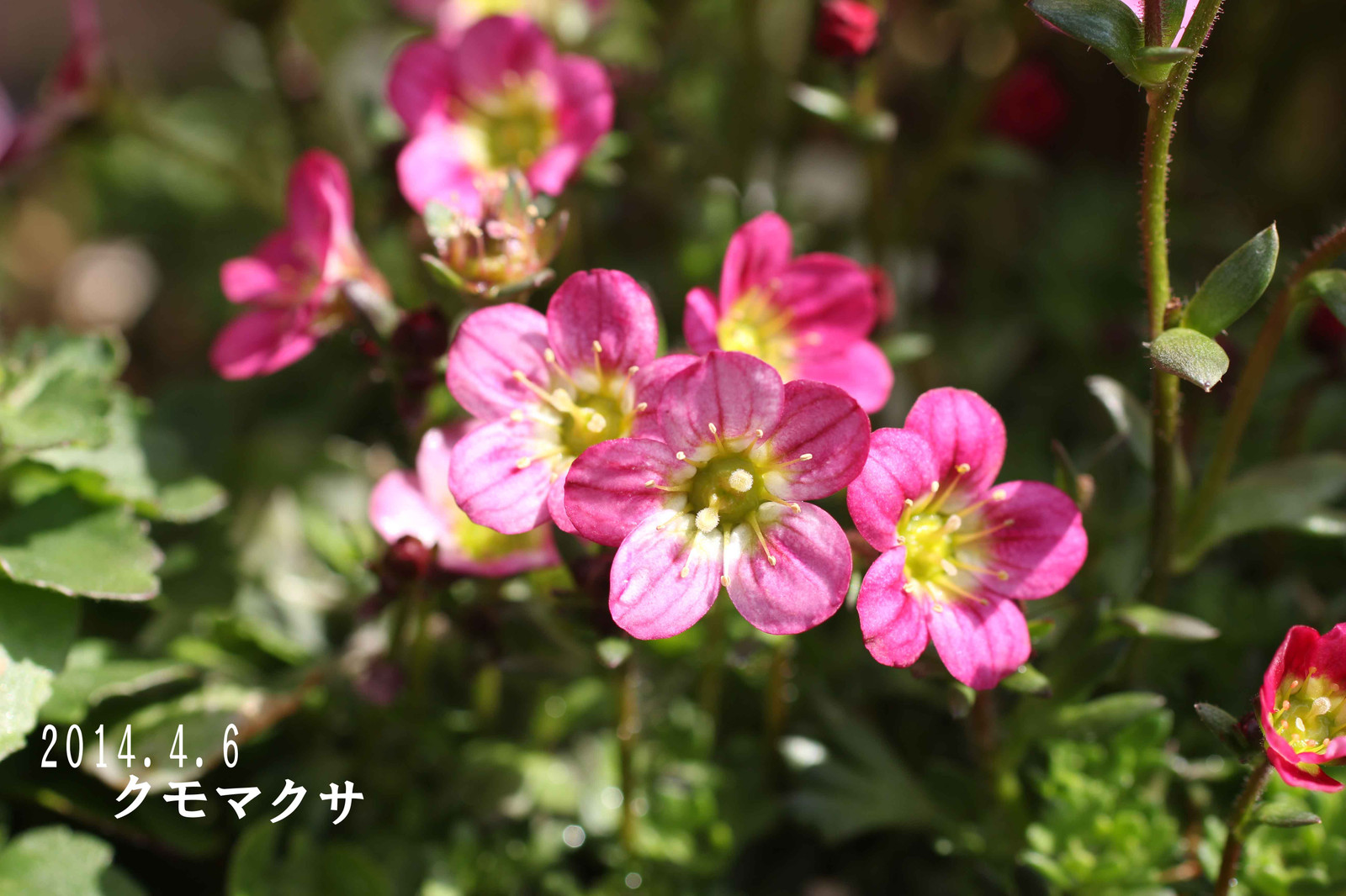 2014_04_06_7053_edited2