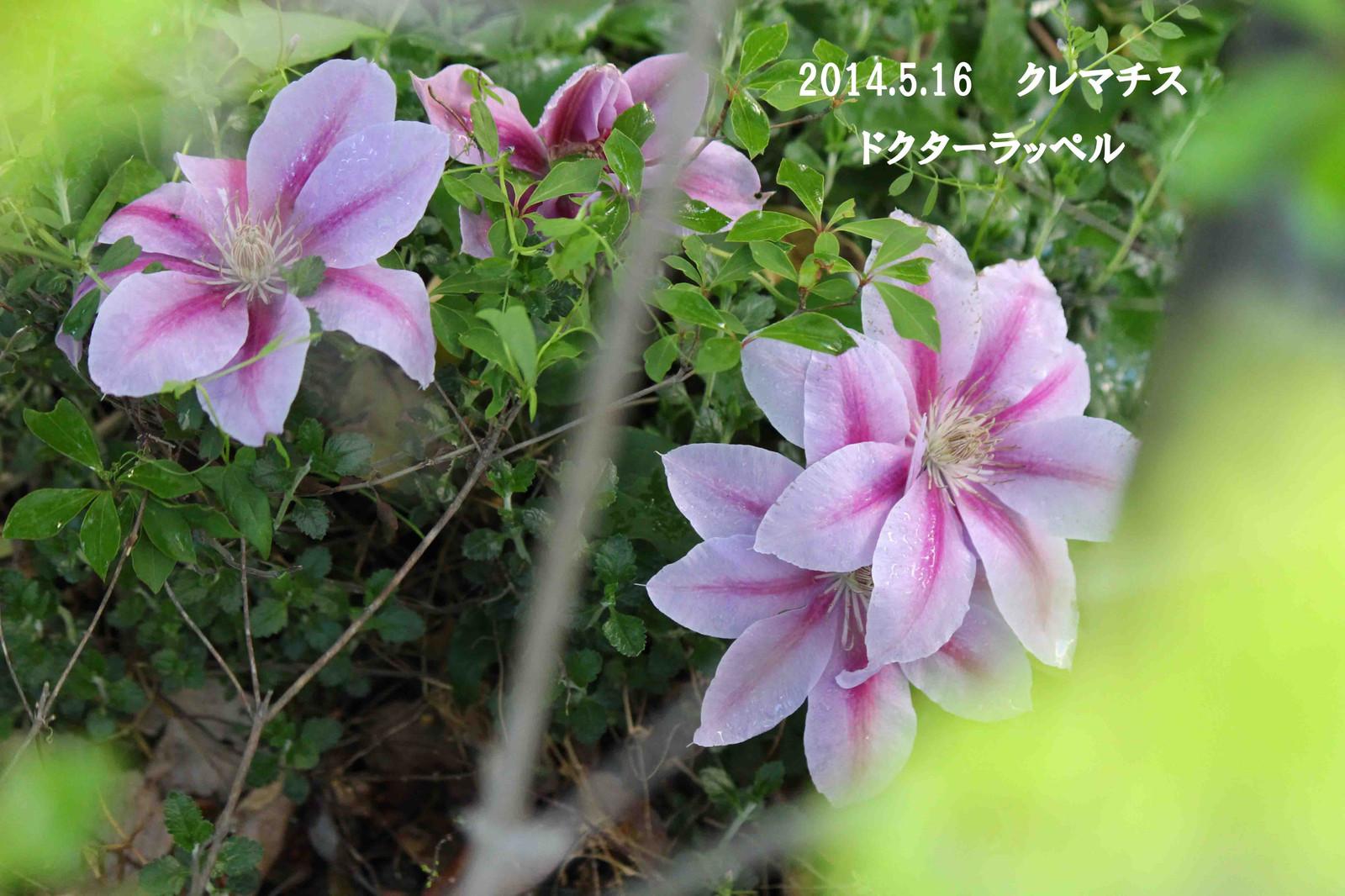 2014_05_17_9447_edited1