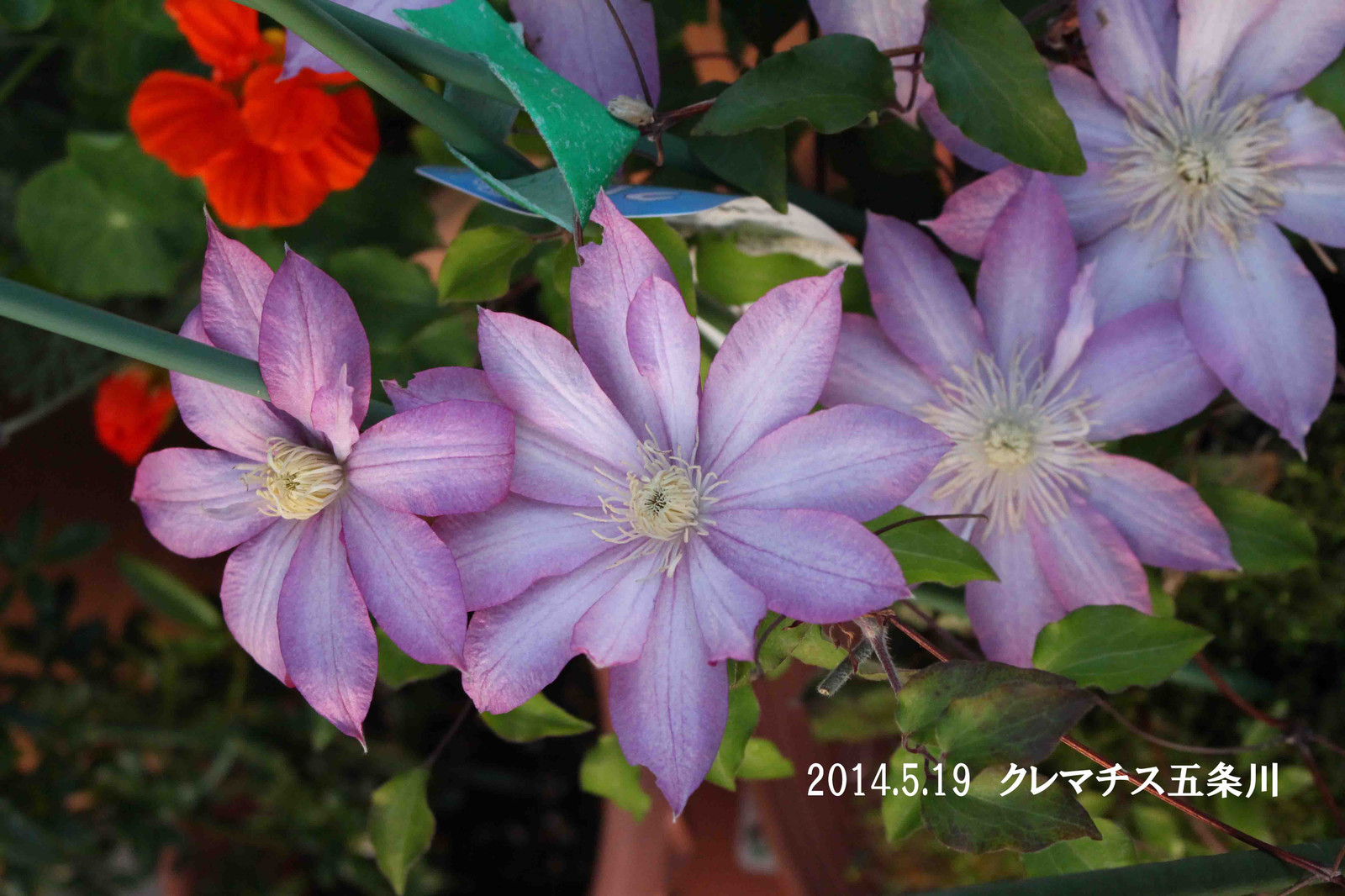 2014_05_19_9565_edited1