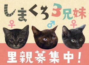 Shimakuro_banar
