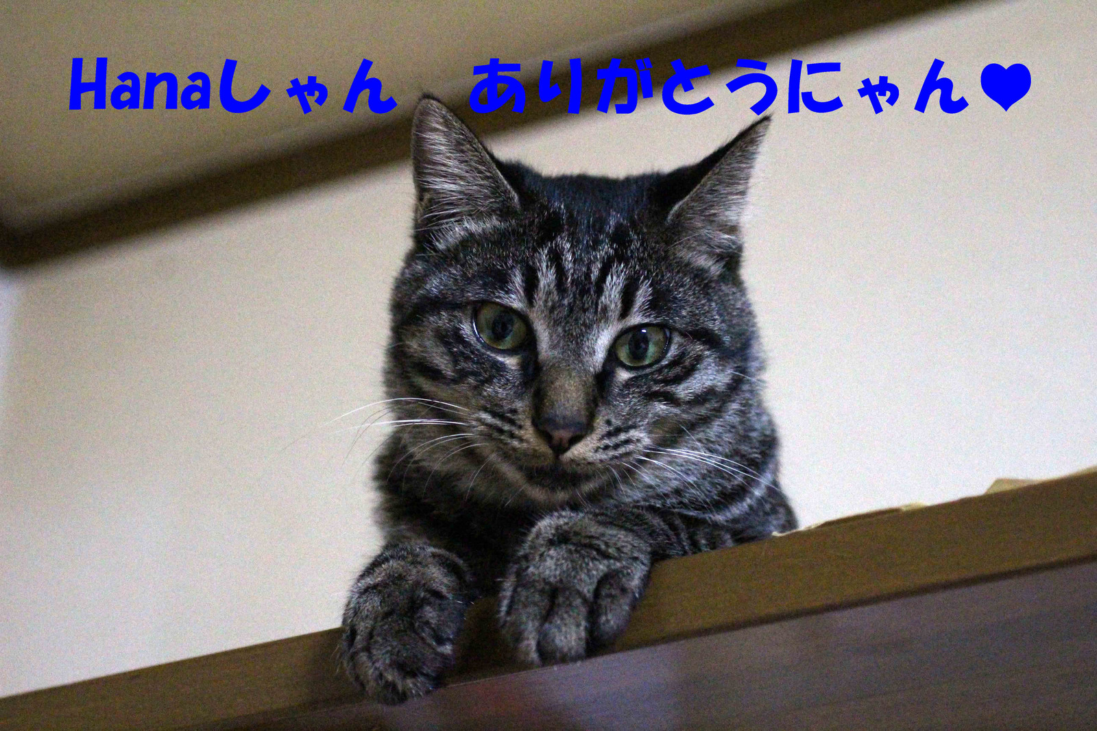 2014_08_06_3863_edited1