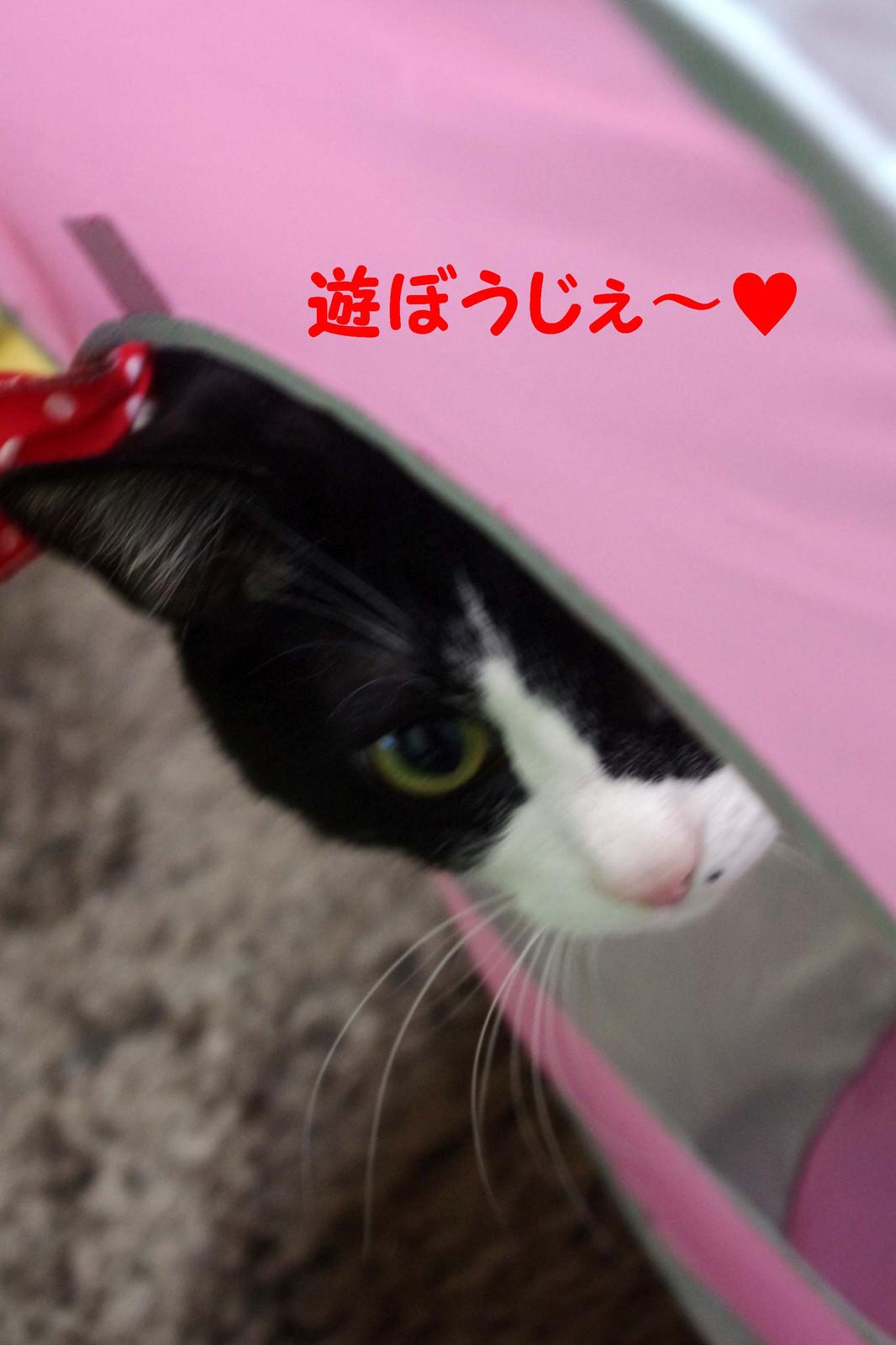 2012_03_21_3063_edited1