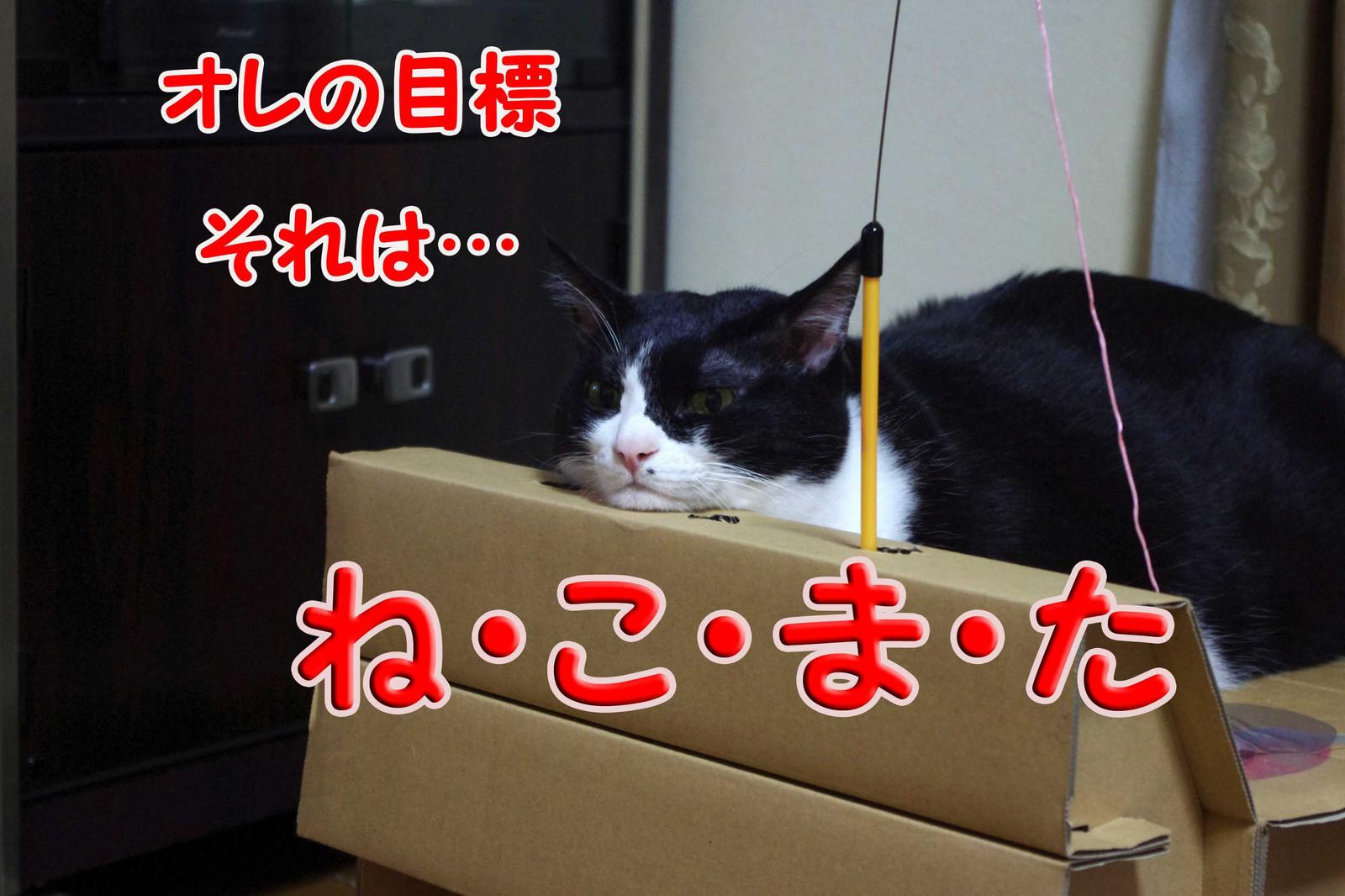 2012_11_22_2246_edited1_edited1