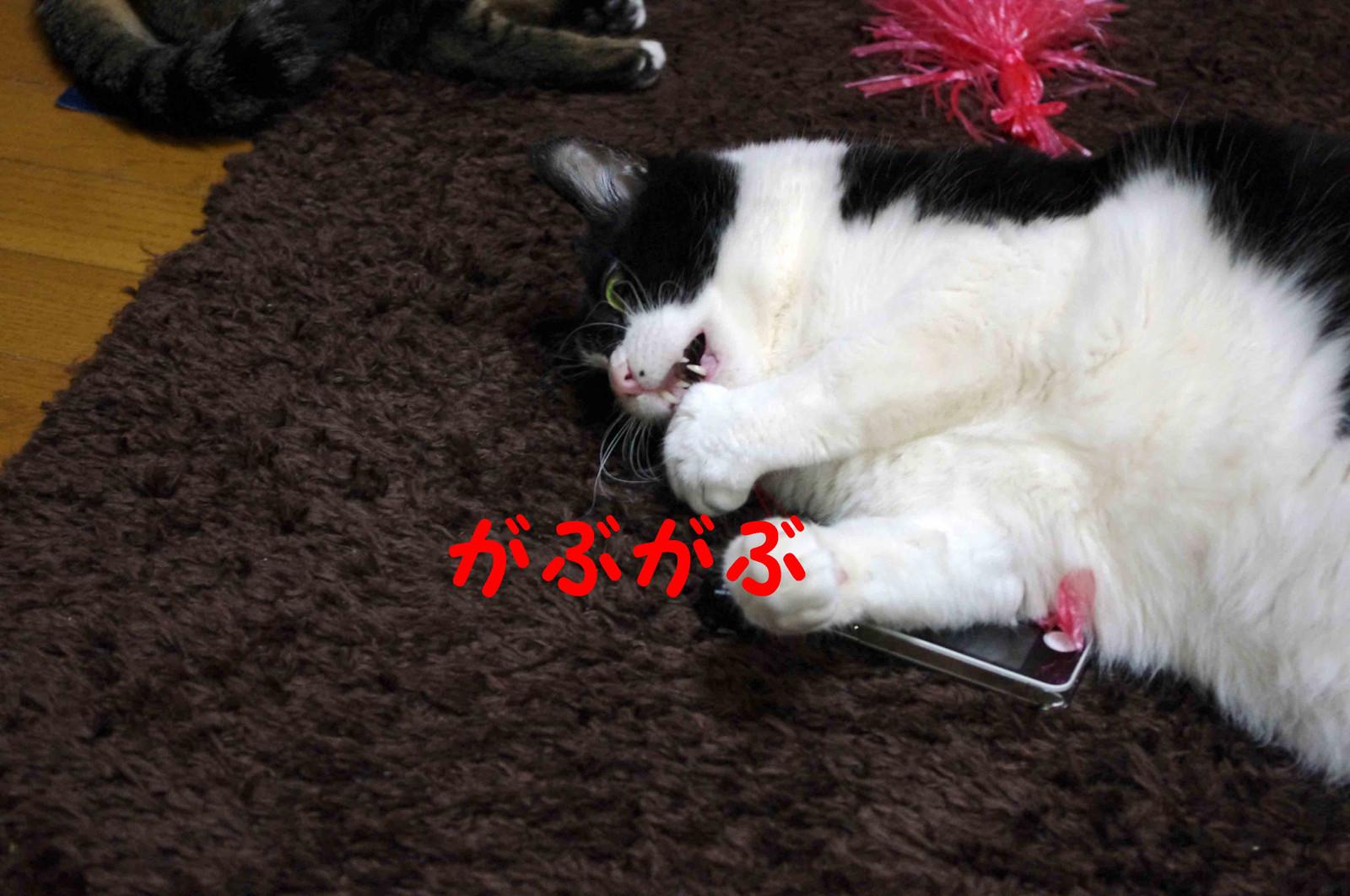 2012_02_19_2275_edited1