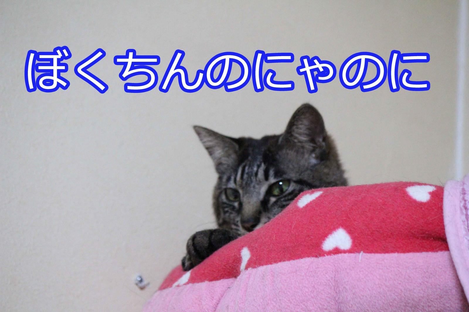 2015_03_09_5205_edited1
