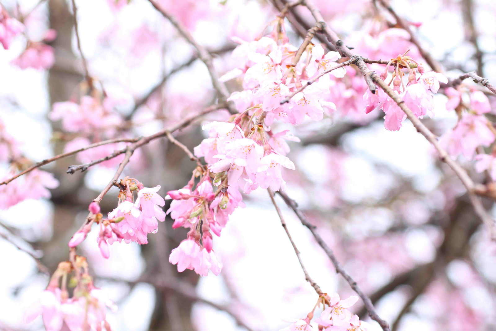 2015_04_05_7192_edited1