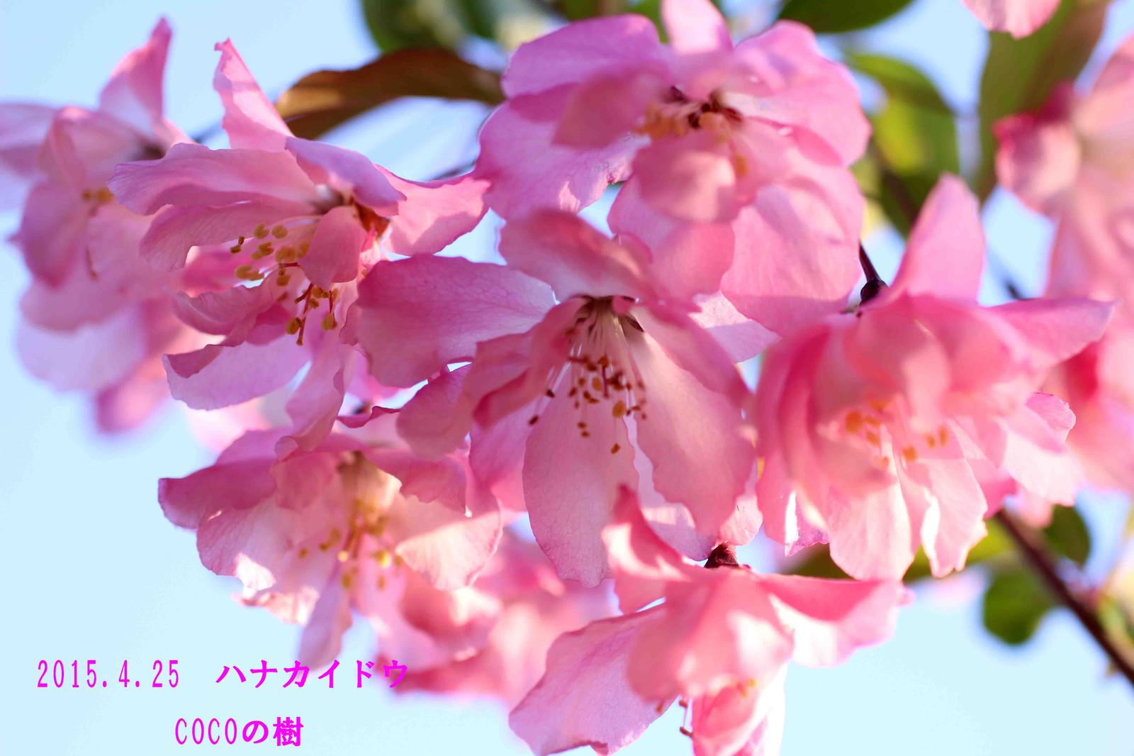 2015_04_25_8554_edited1