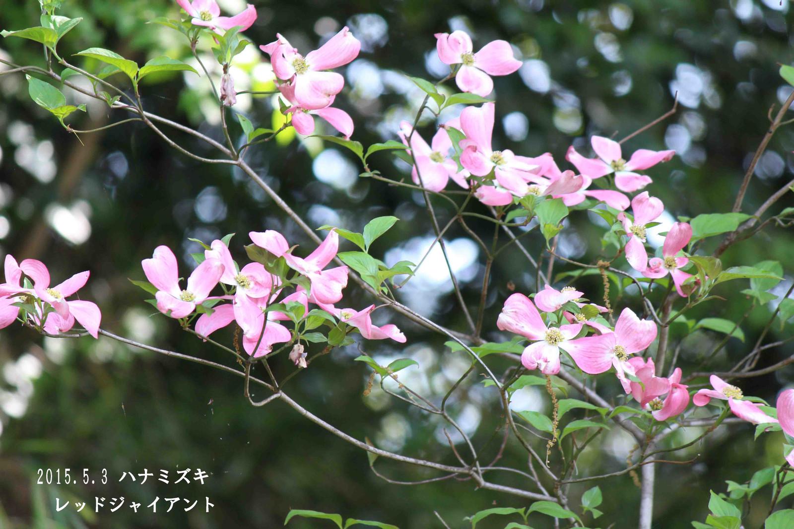 2015_05_04_8815_edited1