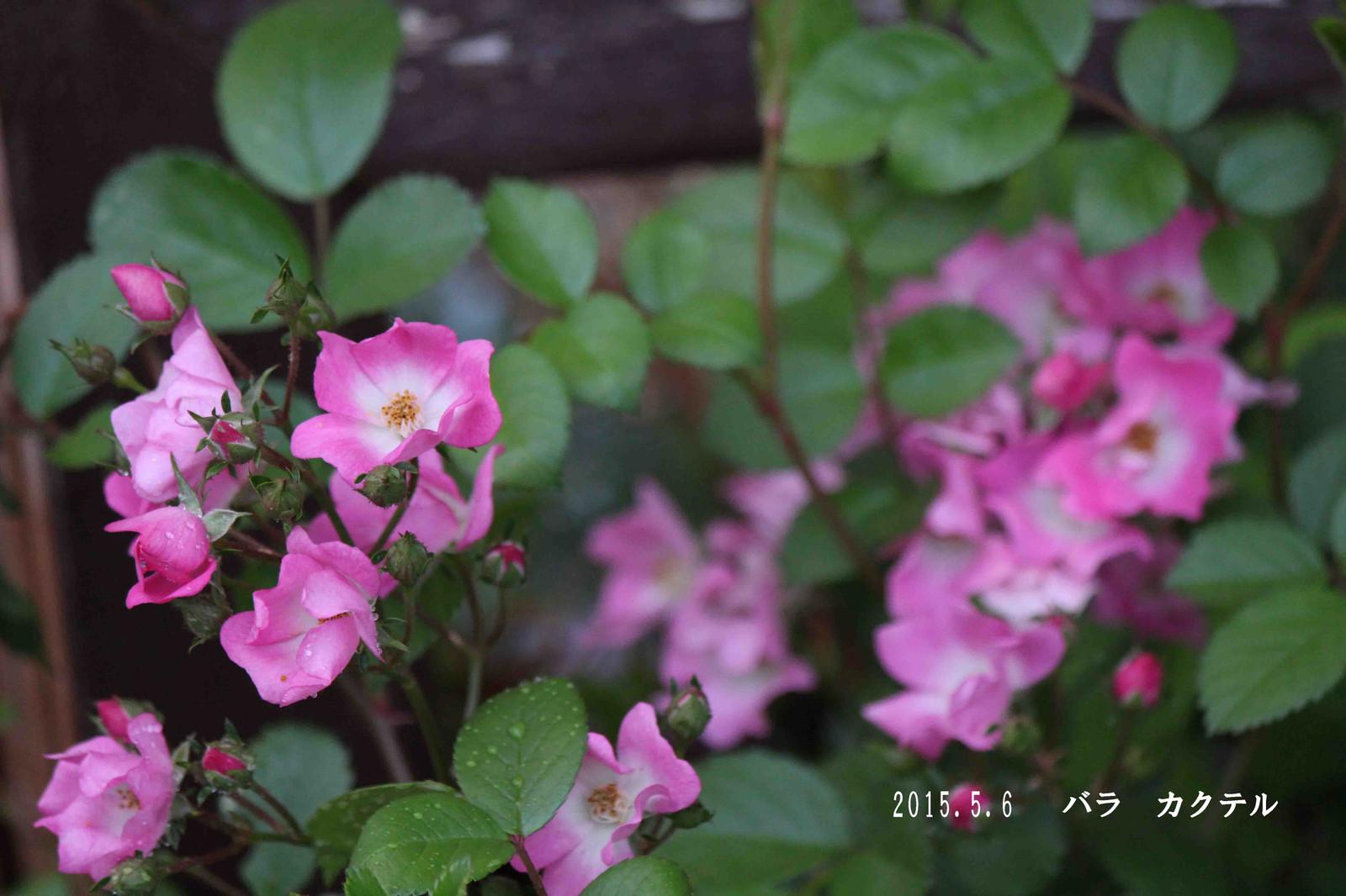 2015_05_06_9108_edited1