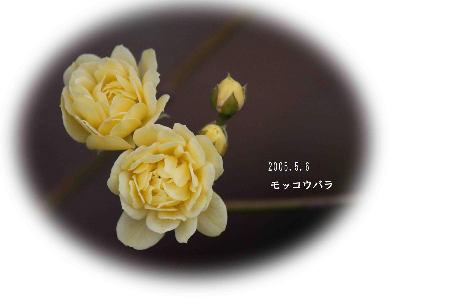 2015_05_06_9112_edited1