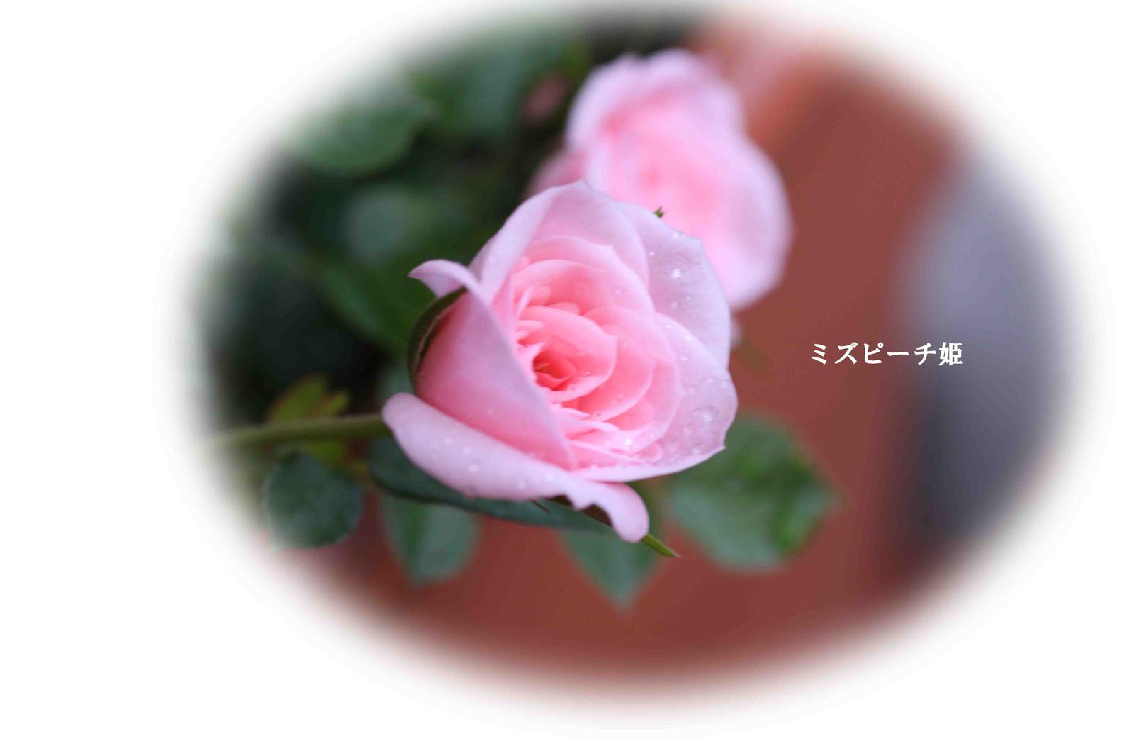 2015_05_09_9214_edited1