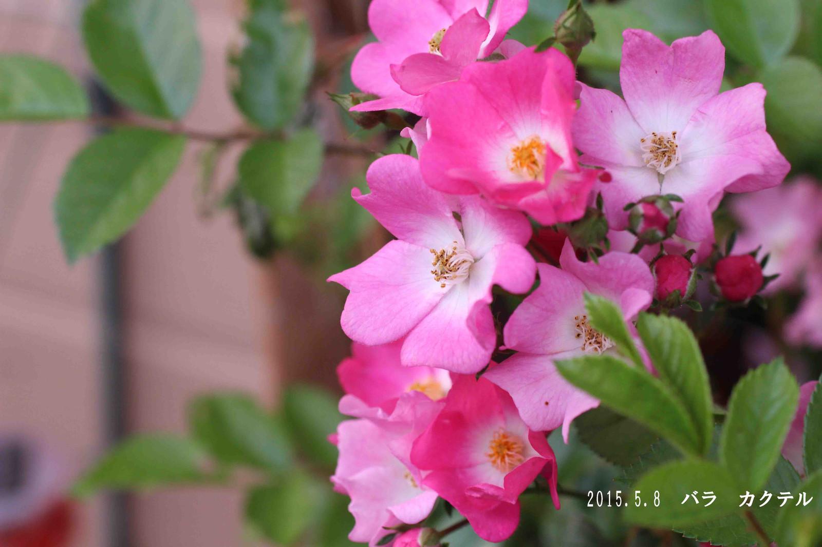 2015_05_09_9200_edited1