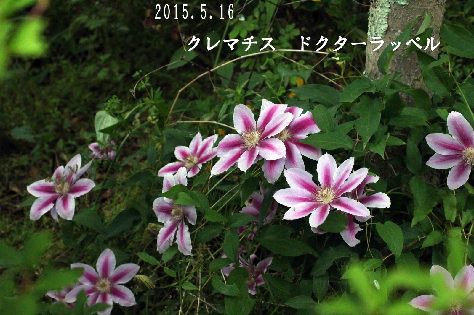 2015_05_16_9395_edited1