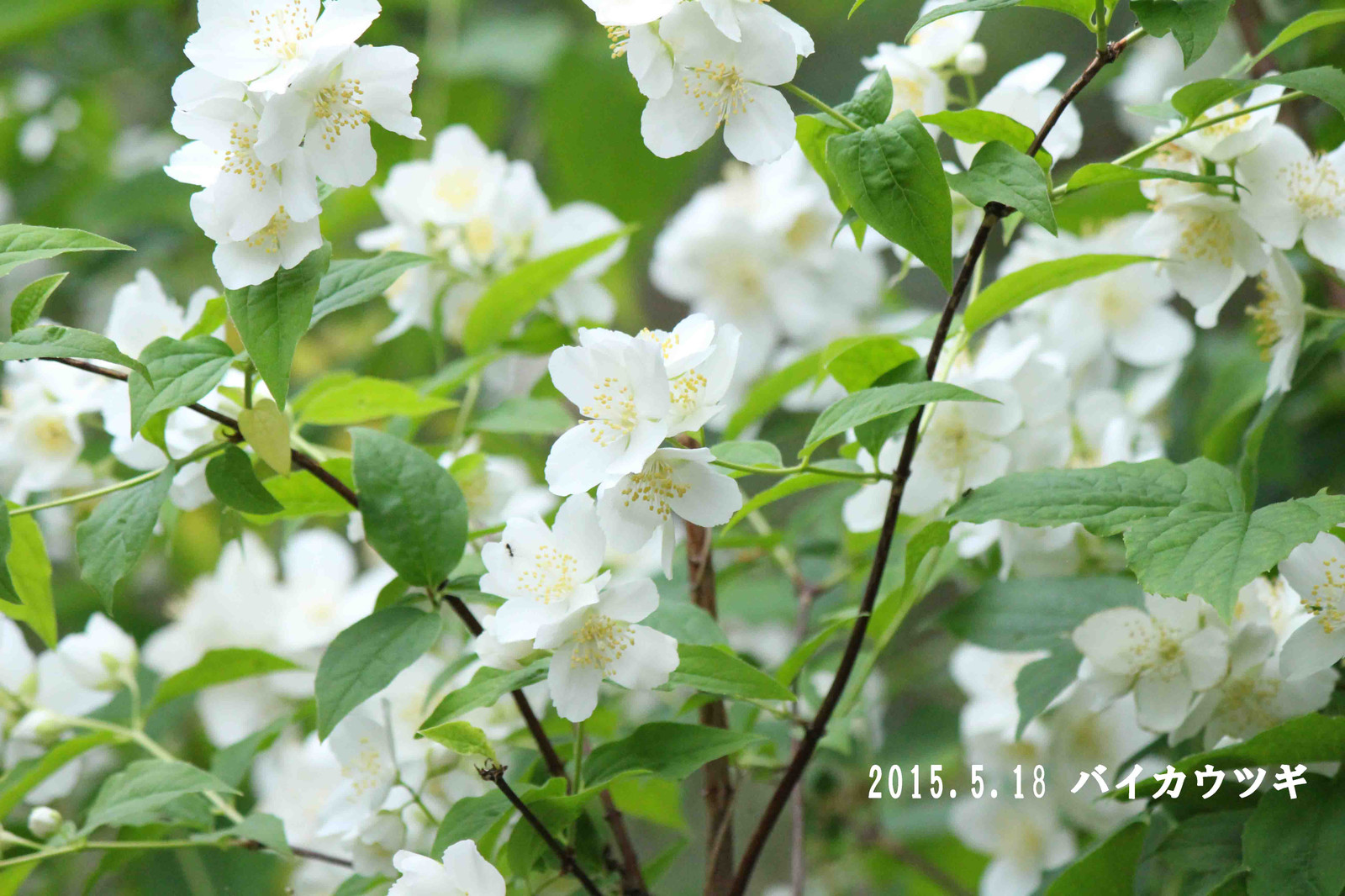 2015_05_18_9492_edited1