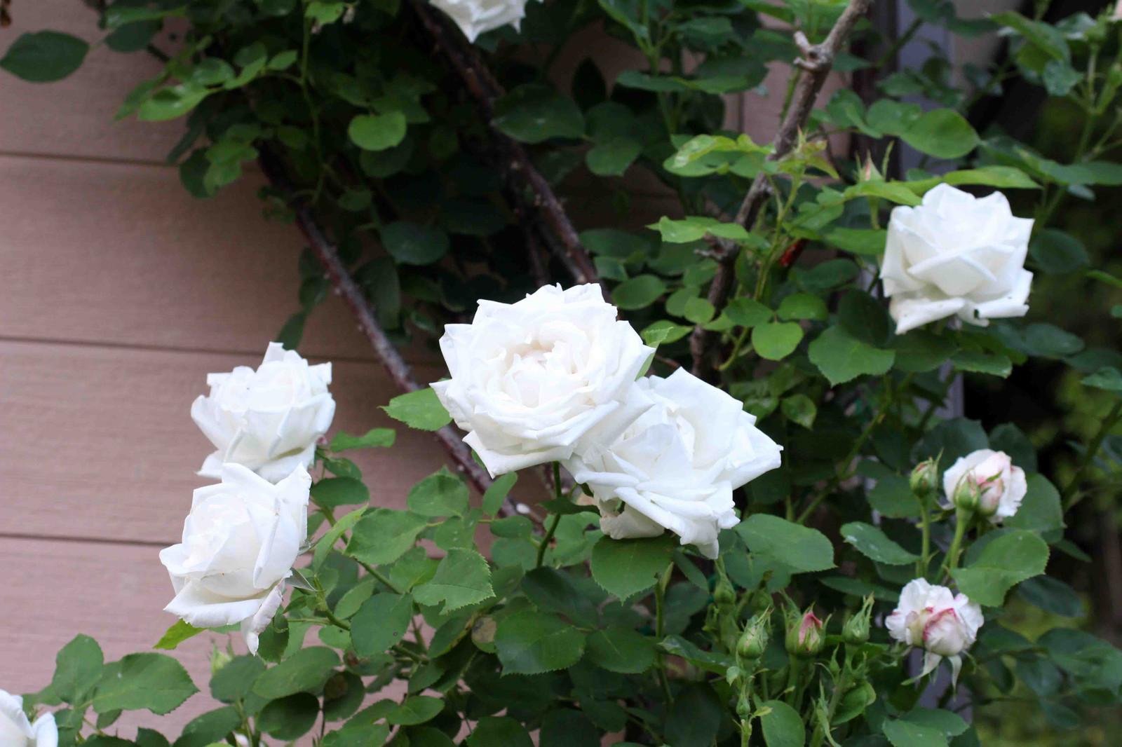 2015_05_24_9699_edited1