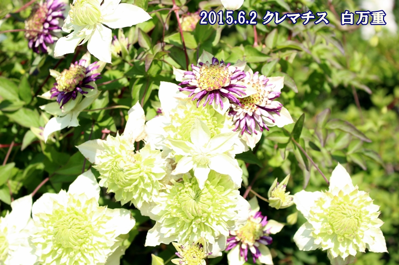 Img_75751