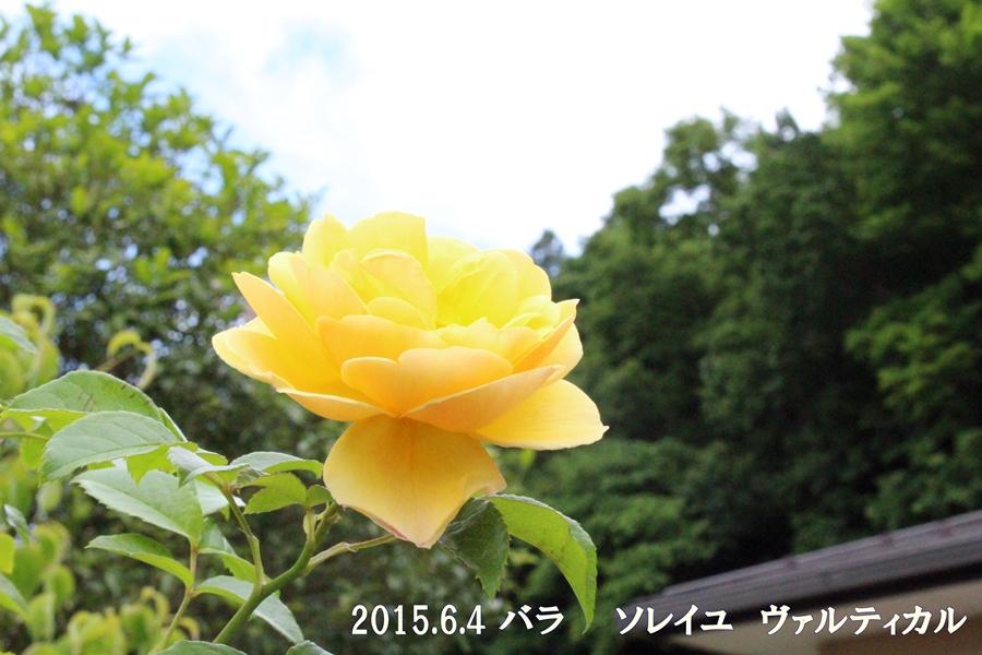 Img_77791